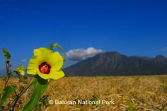 Baluran National Park, Situbondo East Java, Indonesia (little piece Africa in Java)