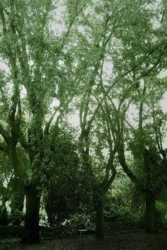 Green Canvas