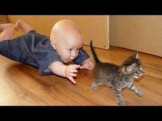Birlikte Oynamak Komik Kediler Ve Bebekler - Sevimli Kedi - YouTube