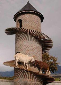 La torre de cabras, Paarl, Sudáfrica