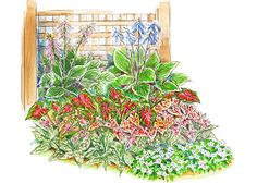 Shade Garden Plans  Under a tree or beside a building: Those tough shady spots in your landscape take planning to plant, but they reward with interesting foliage and distinctive color. Shade-garden plans -- including our surefire layouts -- beautify ... see more 18 Layouts for Shady Spots