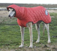 Greyhound hooded waterproof coat from AK Creations. Such awesome coats, pj's, snoods & more for hounds.