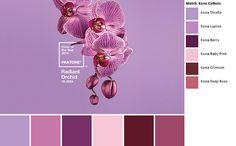 Pantone 2014 Radiant Orchid Kona palette | Flickr - Photo Sharing!