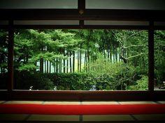 宝泉院:新緑の額縁庭園