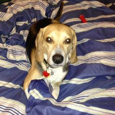 - Badger aka Toby -  Please share our photos and visit our website to see all of our adoptable dogs.