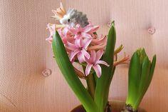 北欧の窓辺を飾る冬の花 | [ハンドメイド] モールアニマル劇場―抱きつきたい | あしたの生活 | NHK出版