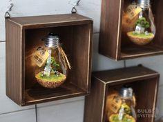 Terrarium Diy, Lightbulb, Boyfriend Birthday, Diy Home Crafts, Decoration, Birthday Gifts, Waterfall, Projects To Try, Fish