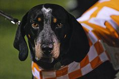 Smokey, University of TN mascot, he can even sing Rocky Top... Great sports stories and audio podcasts at www.RollTideWarEagle.com