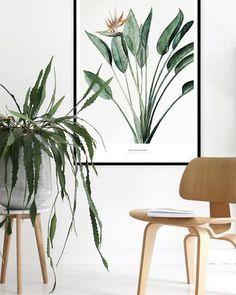 Botanics /  Strelitzia