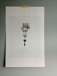 hi.tech monday: muros botánicos / botanical walls free printables roundup