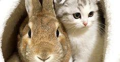 家に迎えた子猫を温かく育ててくれたのは、耳の長いお兄ちゃんでした♪ (9枚)|ペットフィルム -犬・猫・ペットの画像・動画まとめ petfilm.biz