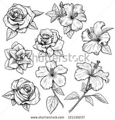 sketches of flowers - Google Search