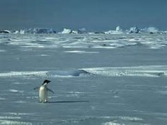 Pinguin Wallpapers Images And Animals Pinguin Pictures 713