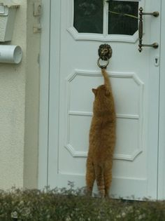 i'm home...every cat should be taught how to knock on the door, or ring a bell.