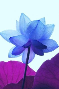 #Pure blue and purple