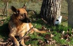 E' vietato lasciare i cani da soli in giardino Molte persone pensano che avere a disposizione un cortile o un bel giardino sia una condizione ideale per il benessere fisico e psicologico del cane. Infatti frequentemente vediamo, nei giardini e ne #cani #cinofilia #leggisuicani