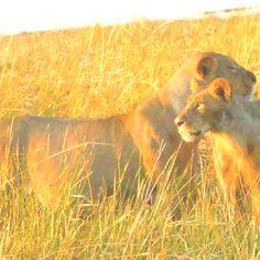Chobe National Park, Botswana. Photo by KMH.