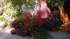 Květiny v zahradě paní Kateřiny zaplňují doslova každý volný kout.