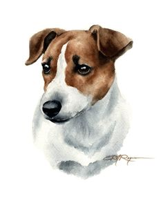 Jack Russell Terrier Art Print by Artist DJ Rogers Jack Russell Terriers, Chien Jack Russel, Jack Russell Dogs, Cairn Terrier, Bull Terrier Dog, Welsh Corgi Pembroke, Dog Signs, Dog Paintings, Dog Portraits