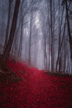 Foggy Misty Autumn Forest - The iPhone Wallpapers Beautiful World, Beautiful Places, Beautiful Pictures, Beautiful Forest, Landscape Photography, Nature Photography, Landscape Photos, Affinity Photo, Autumn Forest