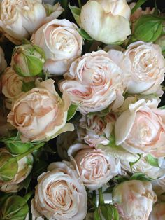 Bombastic Spray rose. Bit on the pricey side but could be nice for bouquets, button holes & flower crowns?
