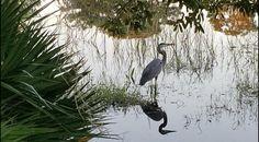 Reflection Photos, Birds, Animals, Animales, Animaux, Bird, Animal, Animais