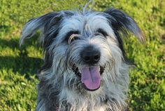 Harry sembra un cane da film! Cerca casa! info: adozioni@leudica.org