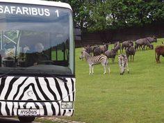 Safaribus Vás pohodlně provede divočinou...
