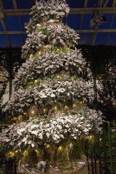 Longwood Gardens - West Conservatory - Christmas 2015 https://michaelsphotos.smugmug.com/LONGWOOD-GARDENS/LONGWOOD-GARDENS-CHRISTMAS/