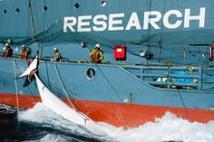 Japan asked to prove its whaling is for scientific research