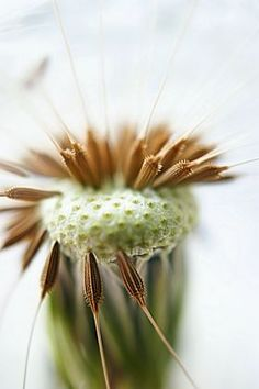 metal canvas Abstract macro flower dandelion nature seed seeds plant close up detail head flora floral botanical