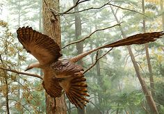 The Four-Winged Dinosaur -   In 2002, the discovery of a beautiful and bizarre fossil astonished scientists and reignited the debate over the origin of flight. With four wings and superbly preserved feathers, the 130 million-year-old creature was like nothing paleontologists had ever seen before.