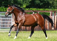 You can see more of the #Frankel footage shot at Banstead Manor Stud here - https://m.youtube.com/watch?v=wnlL2K3BrAU …
