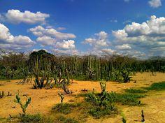 Hermosos paisajes desérticos.