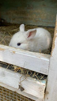 Cute Little Animals, Cute Funny Animals, Cute Dogs, Cute Baby Bunnies, Cute Babies, Newborn Animals, Bunny Room, Cute Husky, Showing Livestock