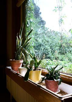 Plants inside the Alvar Aalto House ... Photo by Mark Robinson