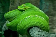 Mega list of free python tutorials, ebooks, cheatsheets and more resources for python developers