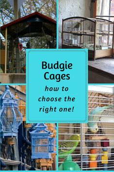 There are so many budgie cages out there, but some are not suitable for your pet! These are the main things to look for in a cage for your budgie. Budgies Care, Parakeet Care, Budgie Parakeet, Parakeets, Budgie Toys, Parrots, Cute Birds, Small Birds, Little Birds