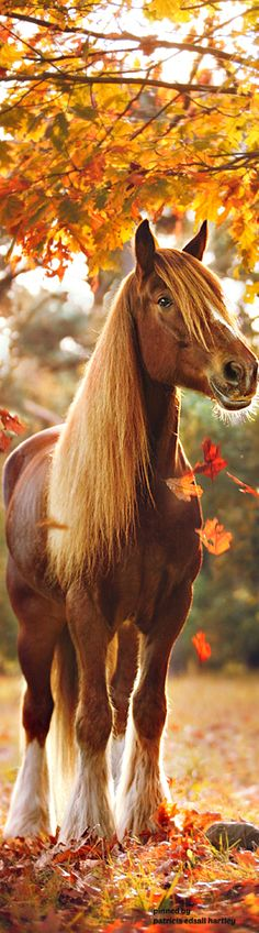 Beautiful horse standing in the fall leaves. Hermoso  caballo                                                                                                                                                                                 Más