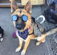 "Adorable Fallout 4 ""Dogmeat"" Cosplay"