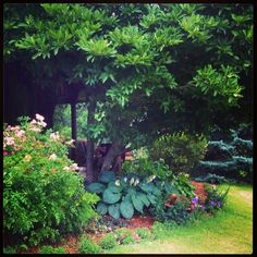 1000 images about shade garden zone 5 on pinterest for Shade garden design zone 8