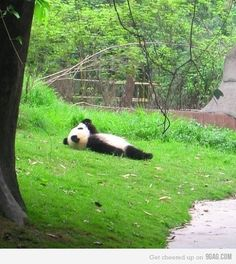 So cute! Just lying..watching the clouds..