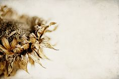 Winter's Beauty by stephmull, via Flickr