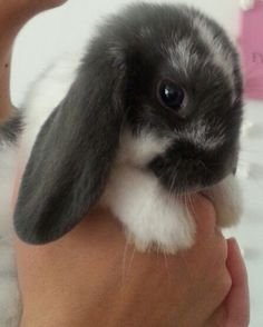 The cutest bunny