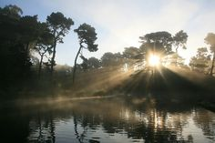 The image was taken at Lloyd Lake in Golden Gate Park, San Francisco, by Brocken Inaglory. This file is licensed under the Creative Commons Attribution-Share Alike 3.0 Unported: http://creativecommons.org/licenses/by-sa/3.0/deed.en #sunburst #sunshine #lake #tree #sunrise #sunset