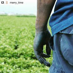 ご参加有難うございました! #Repost @merry_time with @repostapp ・・・ 昨日は徳島県にあるbuaidouさんに藍染体験ワークショップへ。 自分たちで土からつくり、種を蒔き、育て、今の時期に狩りとる藍の葉を発酵させ、すくもにし、出来るだけシンプルに染め上げる地獄建てという昔ながらの方法で染めた色は本当に美しくきれい。藍染体験後には、一面になっている藍の葉畑へ。9月には合わせたのかというタイミングで一面にピンクの花が咲くという。 人の手と自然がともにある生活。 大切な事が何かを改めて感じる良い体験になりました。 #buaisou #藍染 #地獄建て #藍の葉