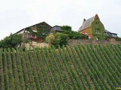 luxembursko a víno