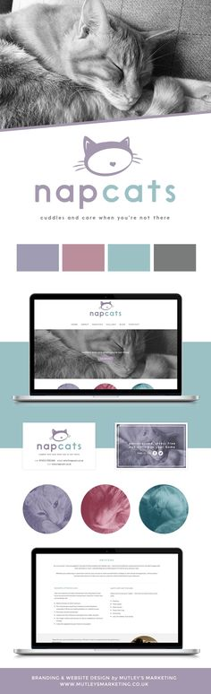 Logo Design and Website Design For Napcats Cat SItting Service in Glasgow