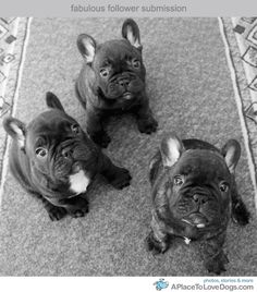 Frenchies http://on.fb.me/O5k6Sf