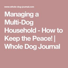 Managing a Multi-Dog Household  - How to Keep the Peace! | Whole Dog Journal